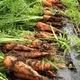 今年も有機野菜の宅配が始まります!