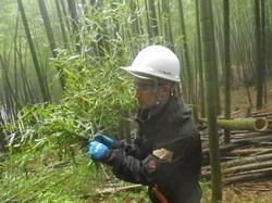 竹林作業2.JPG