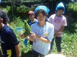17野力野菜収穫4.jpg