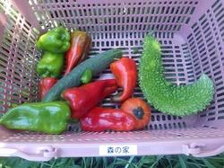 17野力野菜収穫5.jpg