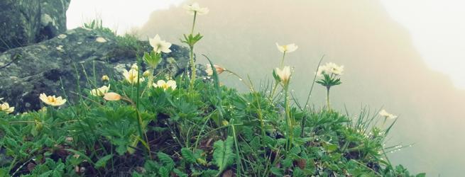 八ヶ岳フラワートレッキング アラフジ~八ヶ岳:硫黄岳・横岳~