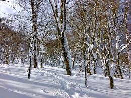 フォトトレ冬の裏磐梯サブ⑤.jpg
