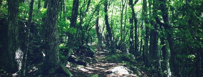 Relax & Trek 春編 新緑のトレイルでマインドフルな時間を