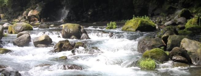 里山つなぎ隊 9月 竹林整備と清流「芝川」の清掃活動