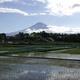 里山のようちえん5月~アイガモと泥んこ田植え、お茶摘み&お茶作り~