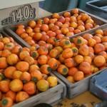 干し柿用渋柿