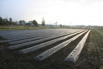 ジャガイモ畑(植付直後)