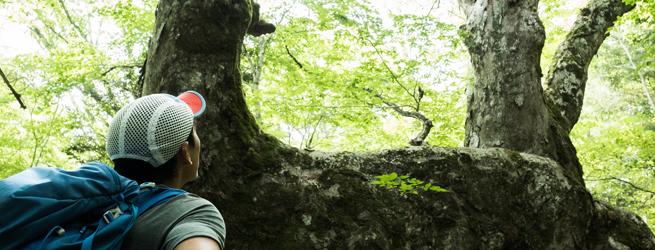 親子de里山キャンプB 巨木の森歩き編【プランB】