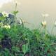 アラフジ7月八ヶ岳硫黄top.jpg